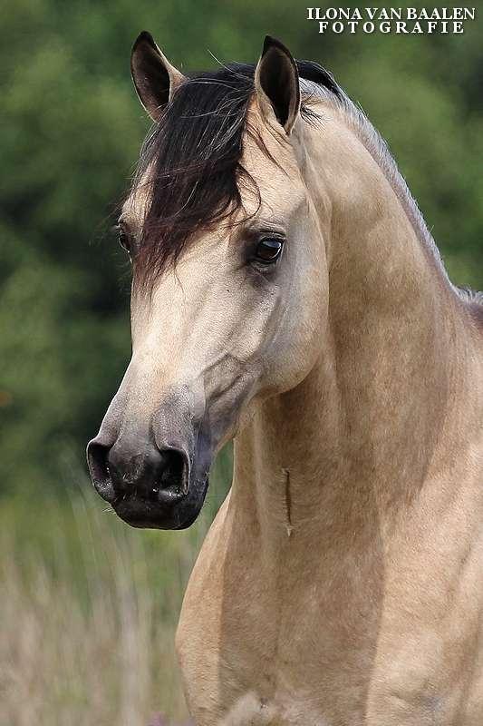 Centraal Aanvraag Topic Paarden Tekenen 5 Bokt Nl