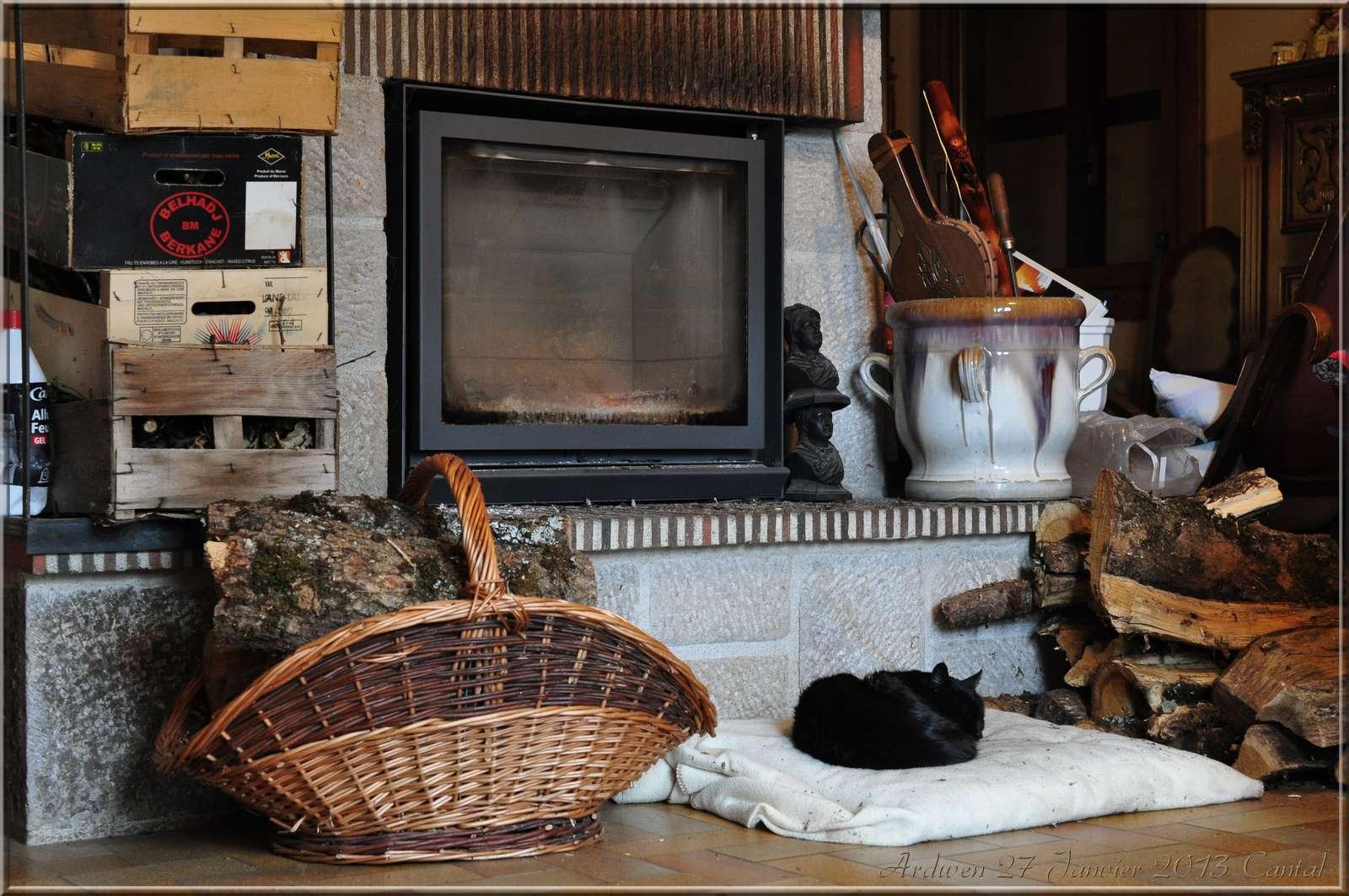 Blog de gifibrillephotos : Gifibrille Photos, 2012, 27 Janvier, Cantal... Un chat, un insert...